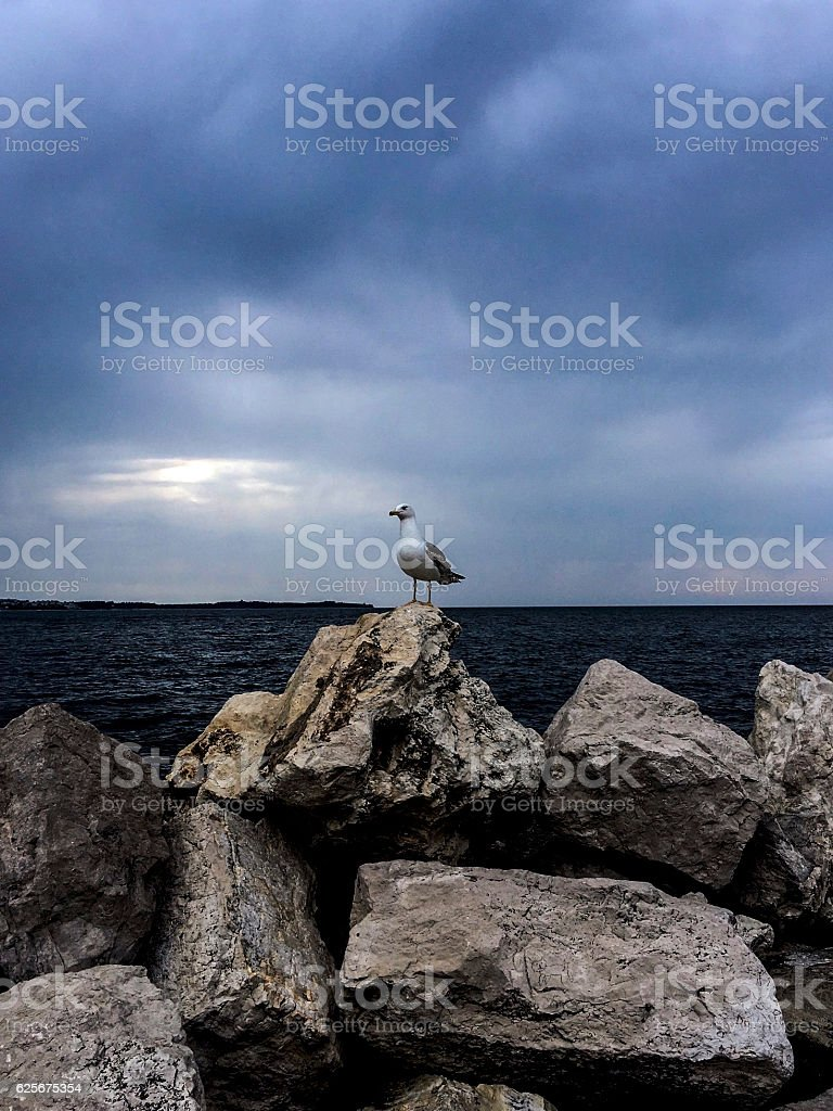 Seagull on the rocks with Adriatic Sea in the background ストックフォト