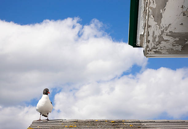 Seagull on the roof stock photo