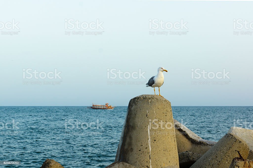 seagull on the sea background foto de stock royalty-free