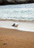 Seagull on the sea shore