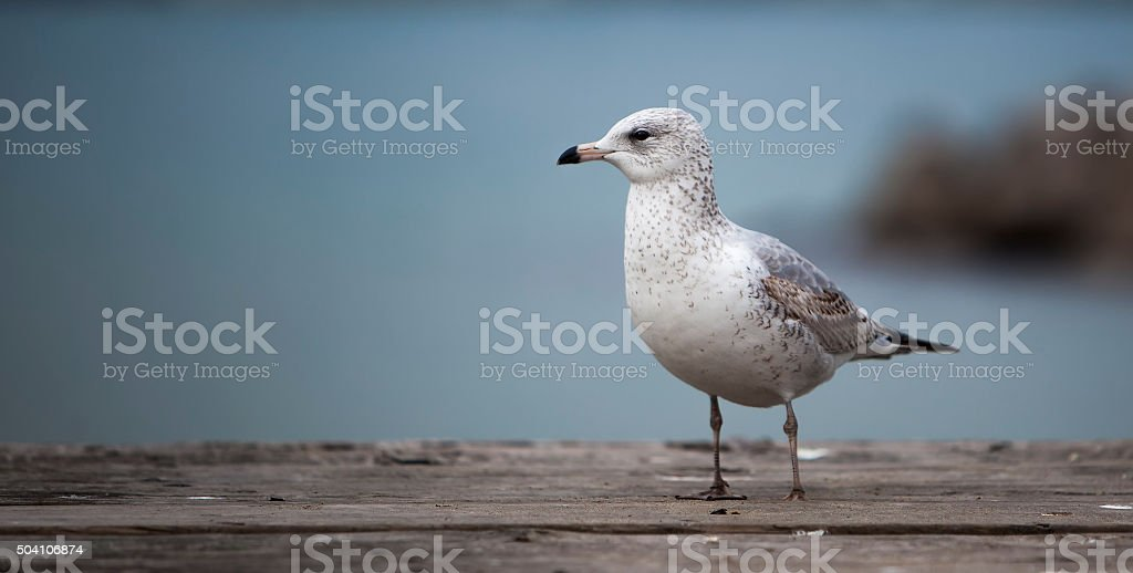 Seagull on the Waterfront stock photo