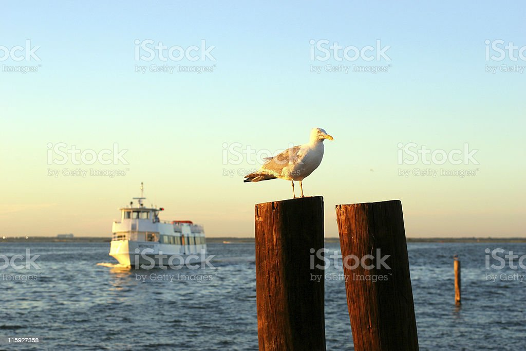 Seagull on Wooden Post stock photo