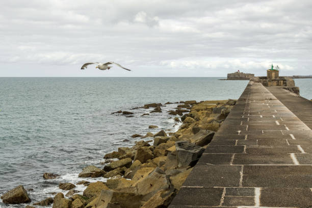Seagull over fortifications dyke in the harbor of Cherbourg. Normandy, France Cherbourg-Octeville, France - August 27, 2018: Seagull over fortifications dyke in the harbor of Cherbourg. Normandy, France cherbourg stock pictures, royalty-free photos & images