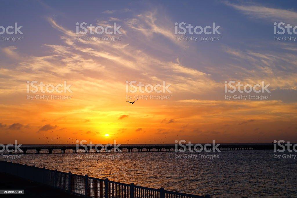 Seagull over sunset stock photo