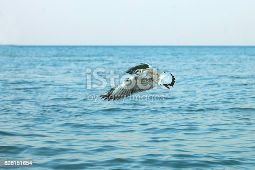 seagull over sea water