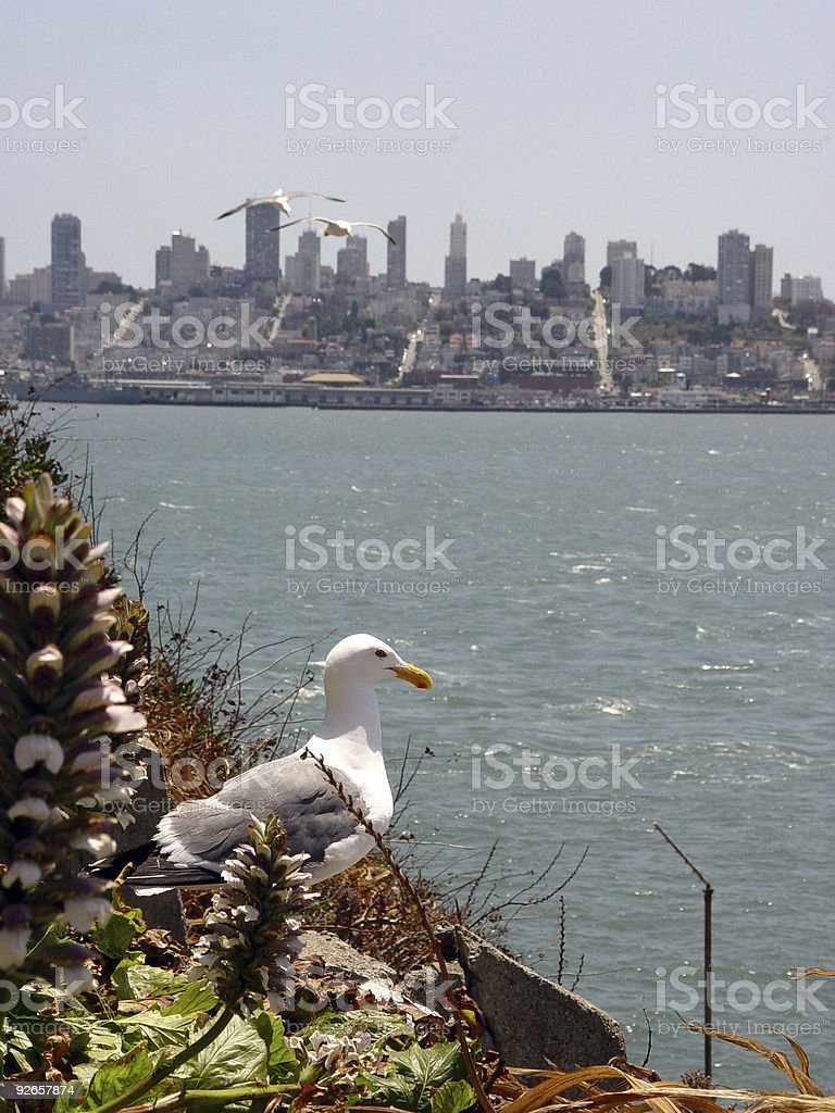 Seagull Overlooking San Francisco royalty-free stock photo