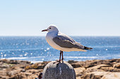 A seagull perched on a post with the ocean behind