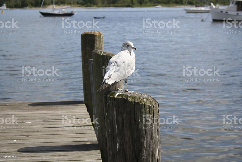 Seagull perched on Pier waiting Essex Harbor Connecticut River royalty-free stock photo