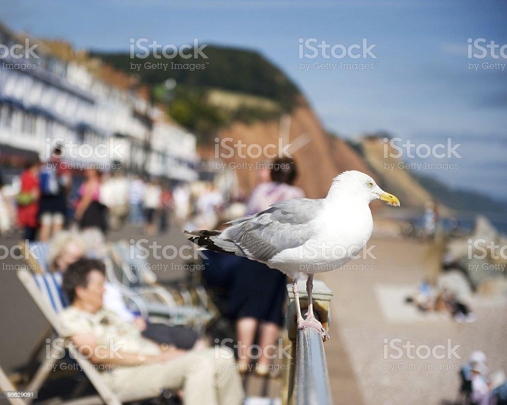 Seagull perching on a seaside railing stock photo