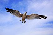 길매기 날다