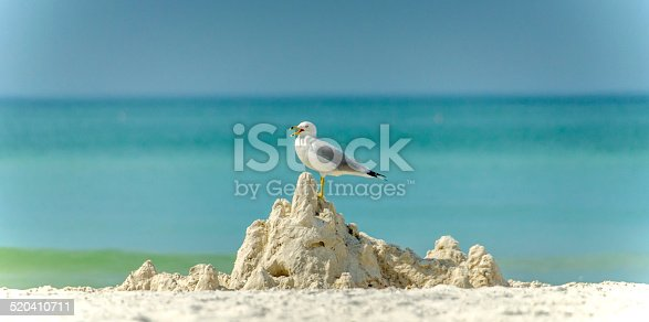 A seagull stands atop a sandcastle.