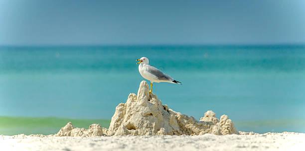 gabbiano - uccello marino foto e immagini stock