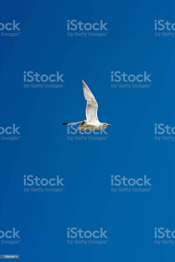 A seagull 免版稅 stock photo