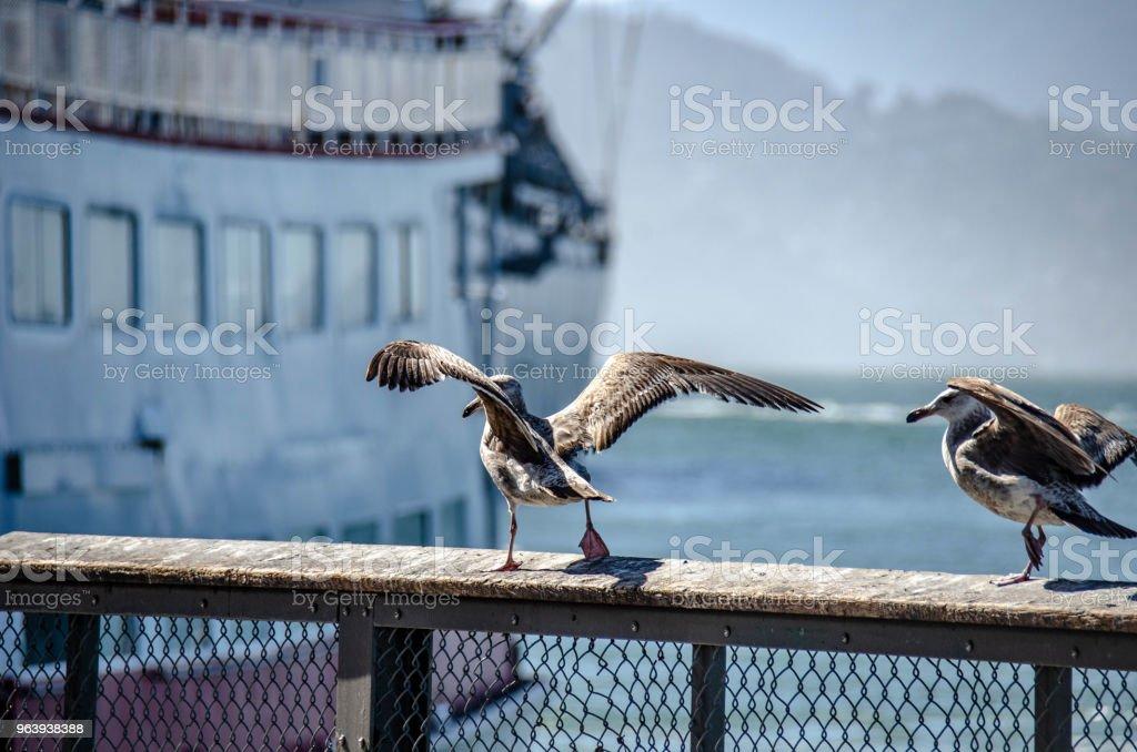 Seagull - Royalty-free Animal Stock Photo