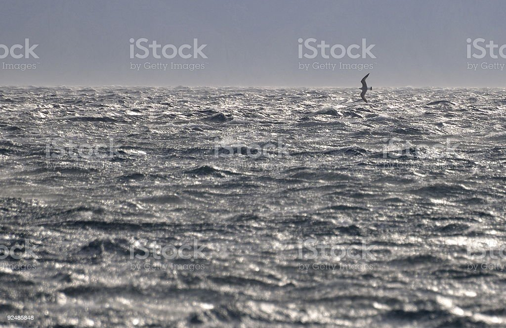 Seagull playing with very strong wind royalty-free stock photo