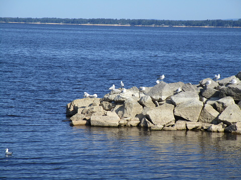 Seagull Point