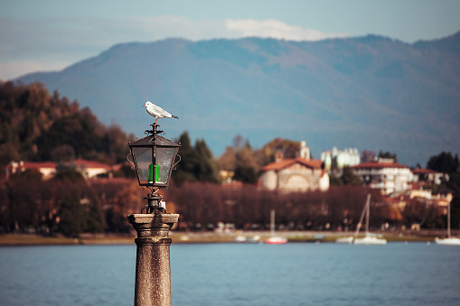Seagull portrait standing on old lamppost in Arona, Italy