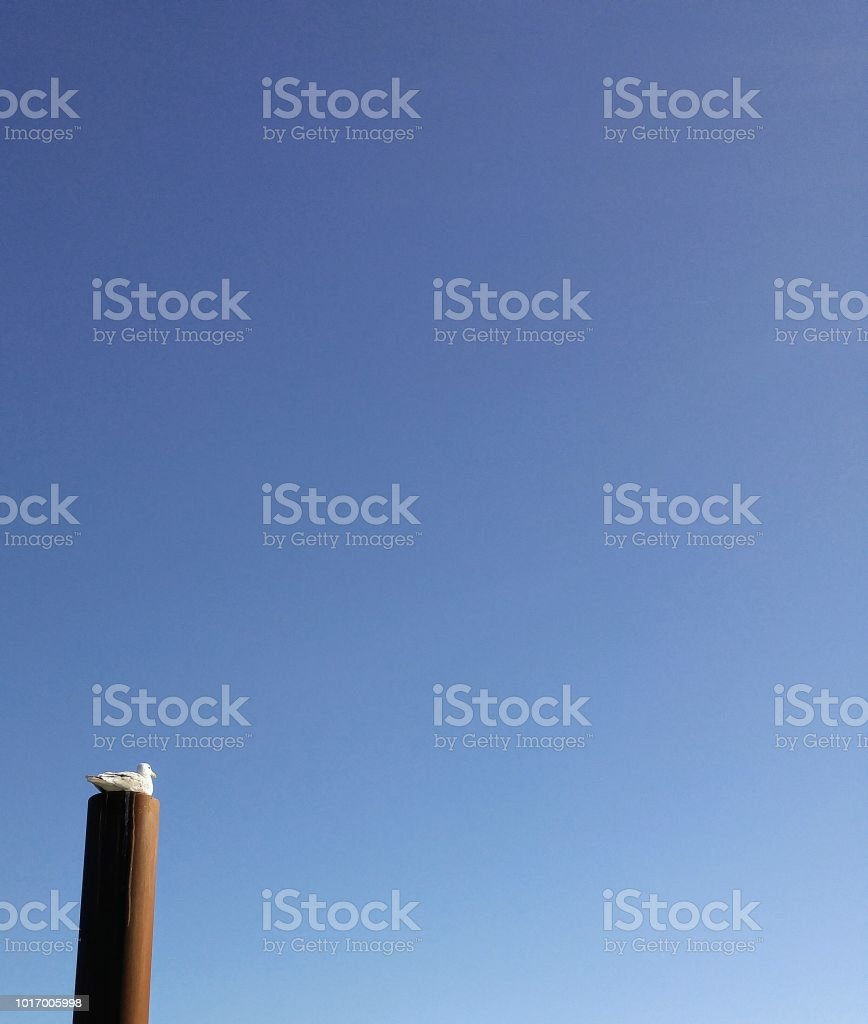 A seagull sits on top of a post at the marina, clear blue sky stock photo