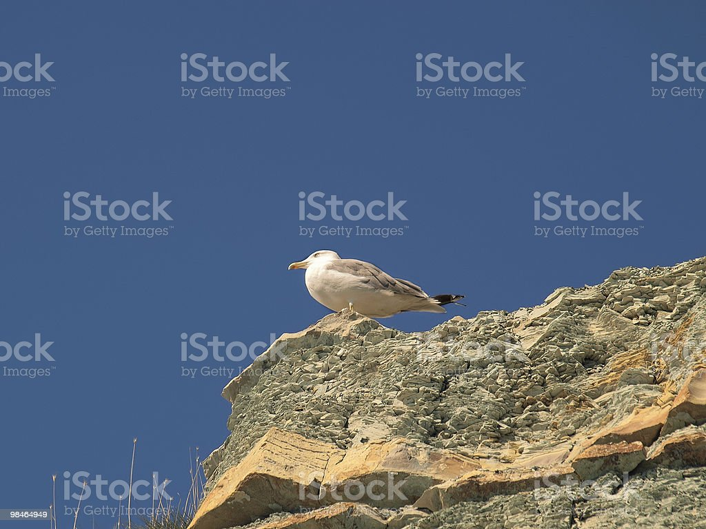 Seagull sitting on a rock royalty-free stock photo
