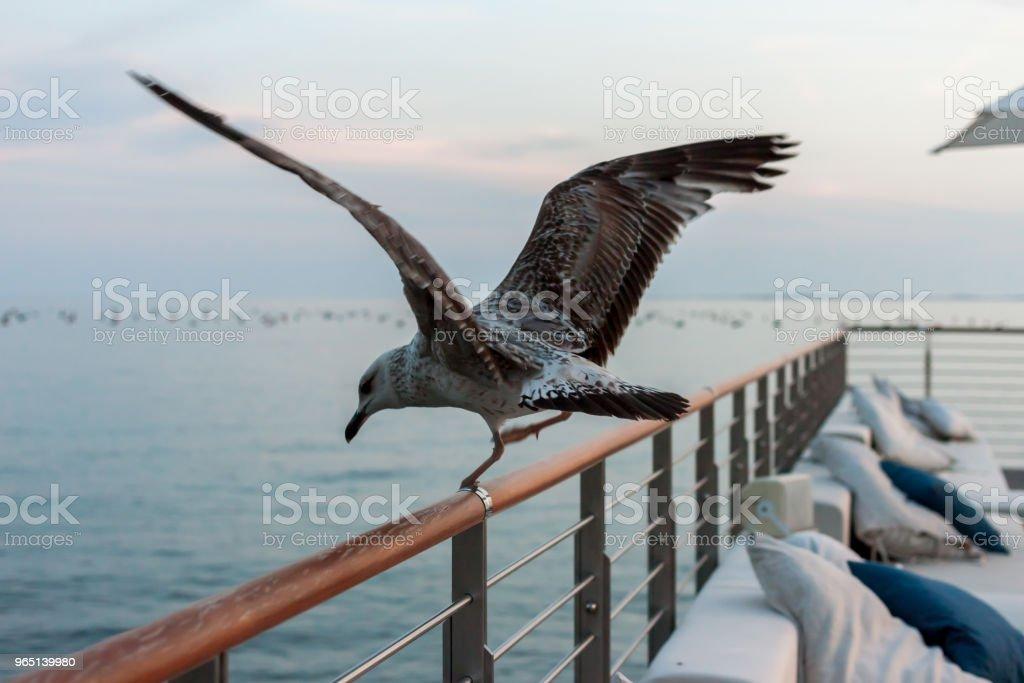 seagull sitting on rail of beautiful terrace zbiór zdjęć royalty-free