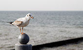 seagull sitting on the parapet by the sea on autumn day