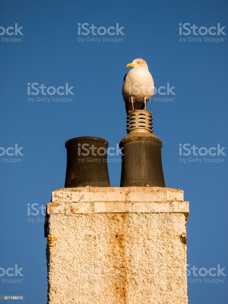 Seagull sitting on traditional chimney piece stock photo