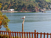Seagull sitting on wooden log on water background