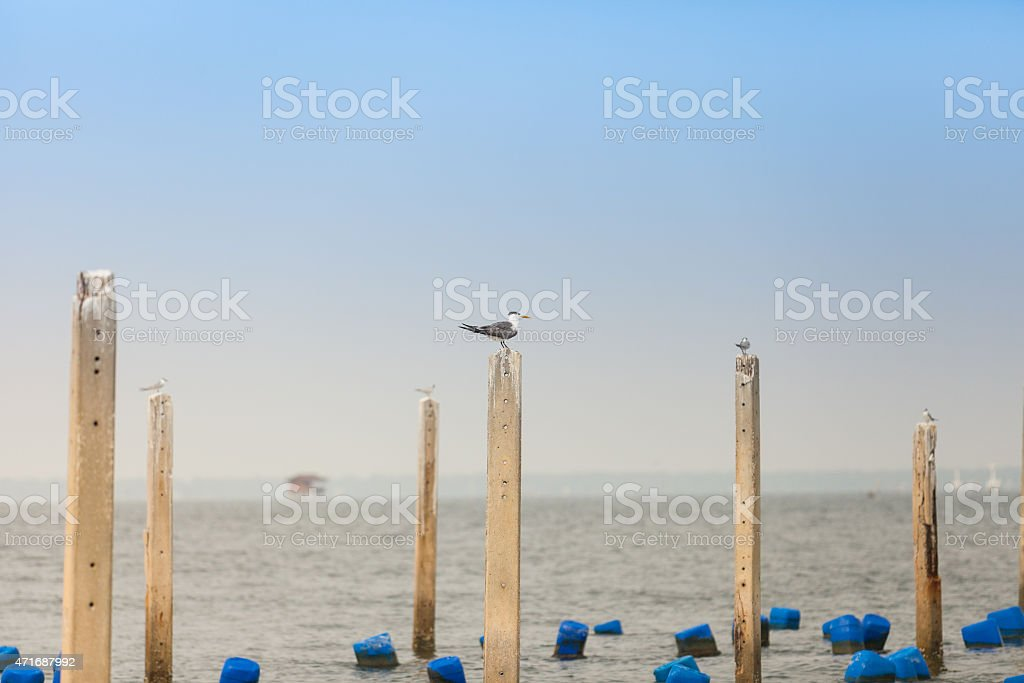 Seagull Standing on a cement block in the sea stock photo