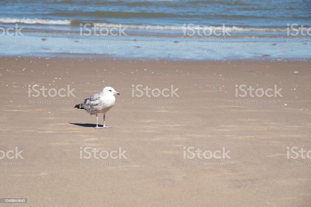 Möwe stehend an einem Sandstrand – Foto