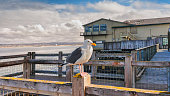 Photo taken in Monterey with a seagull stand over the fence of a harbor.