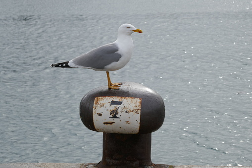 Seagull standing pretty