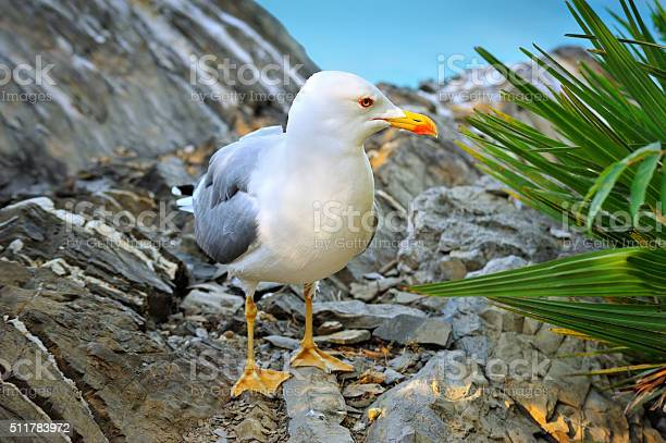 Photo of seagull stands on the rock
