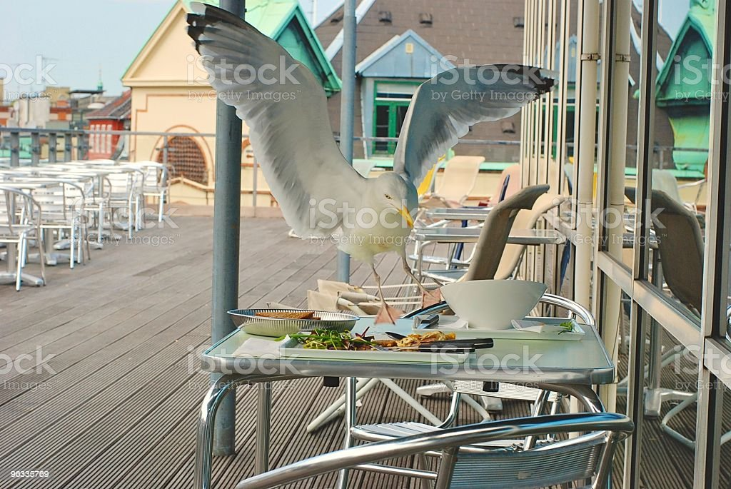 Seagull stealing food from a cafe stock photo