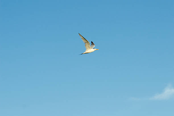 Seagull takes to the skies
