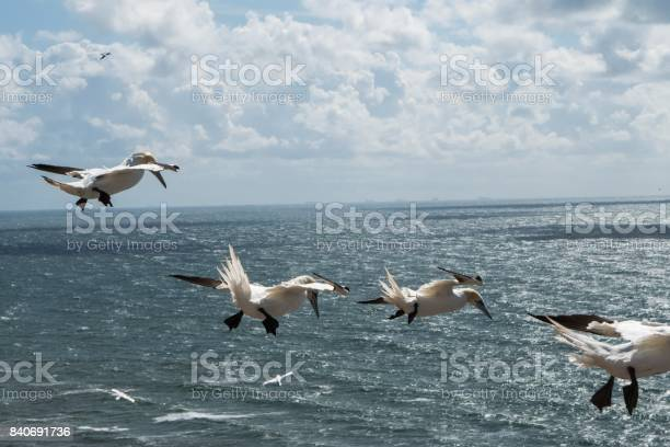 Photo of Seagull-formation flying over the sea