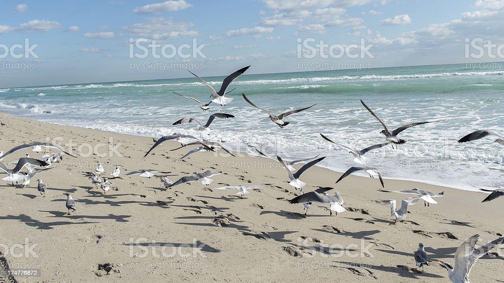 Seagullls landing on the beach stock photo