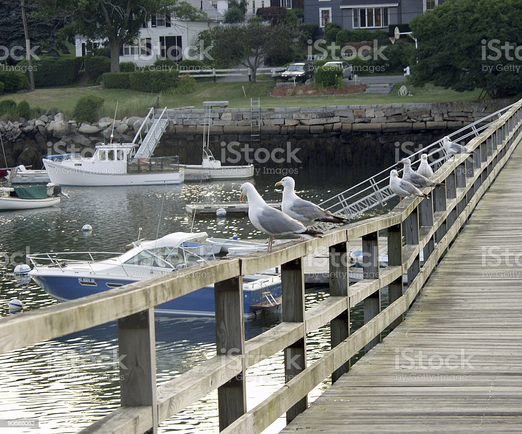 Seagulls - a lazy afternoon royalty-free stock photo