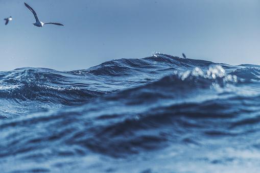 Seagulls and blue rough sea