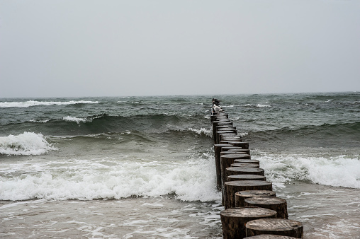 Seagulls and cormorants on the wooden breakwater on a stromy day. Baltic sea in Poland