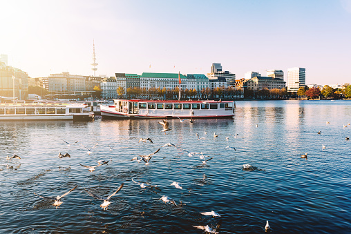 seagulls and passenger crafts on Alster Lake in Hamburg, Germany on sunny day