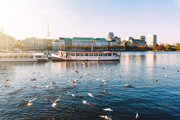 seagulls and passenger crafts on alster lake in hamburg, germany on sunny day - embarcação comercial imagens e fotografias de stock
