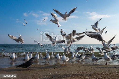 Seagulls and pigeons on the seashore on the beach on a sunny spring day