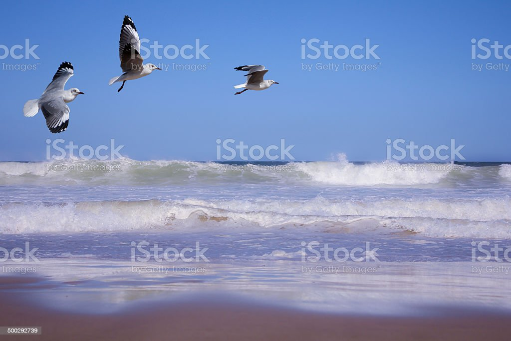 Seagulls and soft waves. stock photo