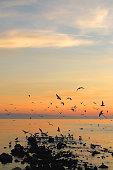 Flock of seagulls on the beach and beautiful sunset. Landscape in Split, Croatia.