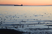 Flock of seagulls and ship during beautiful sunset. Landscape in Split, Croatia.