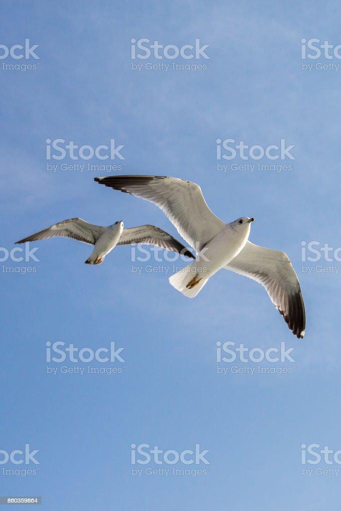 Las gaviotas vuelan en el cielo - foto de stock