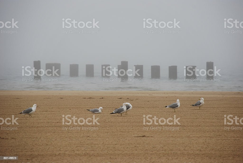 Seagulls are resting on the foggy beach stock photo