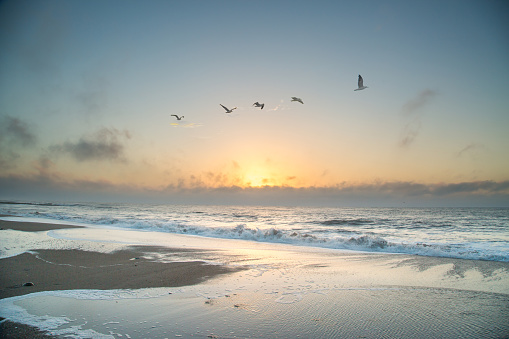 Seagulls at Edisto Island in South Carolina