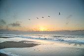 Sunrise and seagulls captured at Edisto Island in South Carolina.