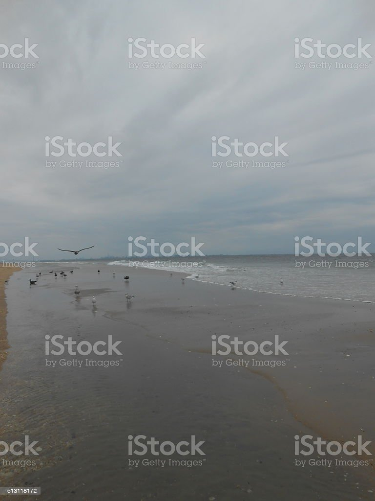 Seagulls At Gunnison Beach At Sandy Hook Nj Royalty Free Stock Photo